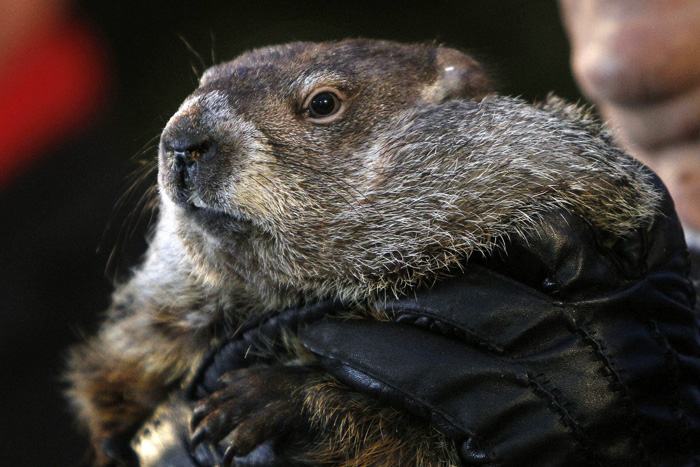 Vista de la tradicional ceremonia en la que la marmota Phil pronostica cuánto durará el invierno, en el pequeño pueblo de Punxsutawney (Pensilvania, Estados Unidos) hoy, lunes 2 de febrero de 2015. EFE