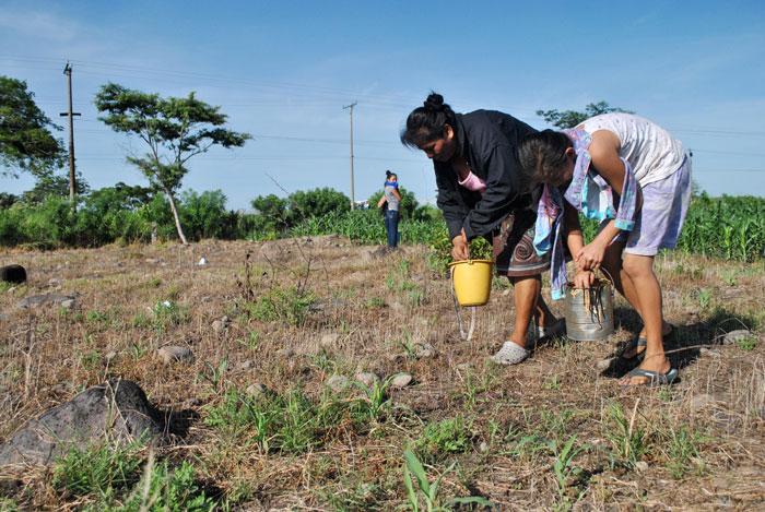 Muchos niños y niñas dejan las clases para unirse a sus familias en el trabajo agrícola, especialmente en las zonas rurales. /DEM