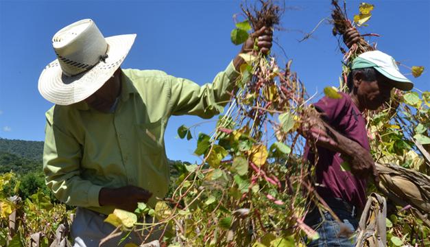 Las compras estatales de semilla han abierto un nuevo nicho de mercado para el agro. / DEM