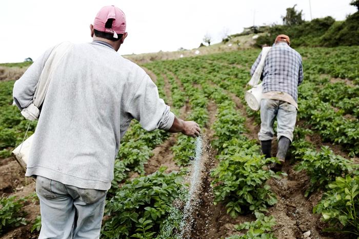 El fenómeno El Niño afecta los ciclos agrícolas de la región latinoamericana. /DEM
