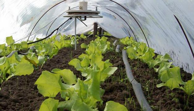 Estas técnicas se están aplicando en hortalizas. /DEM