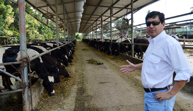 Proleche indica que trabaja por mantener la producción, pese a que algunos ganaderos dejan el negocio. /DEM