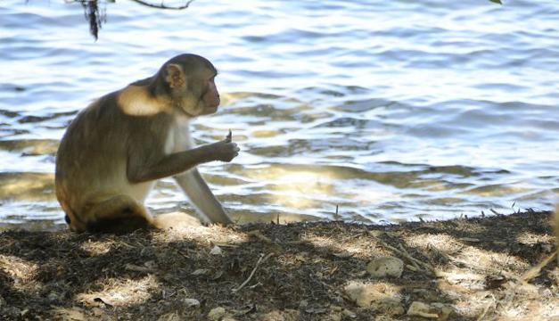 Cortesía: Centro de Primates del  Caribe.