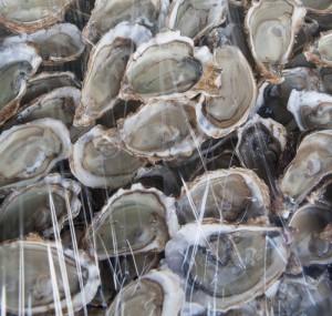 El plan benefició a ocho cooperativas con ostras, y 11 con curil. /DEM