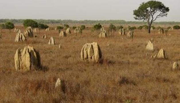 Territorio deshabitado en Australia.Foto/EFE VERDE