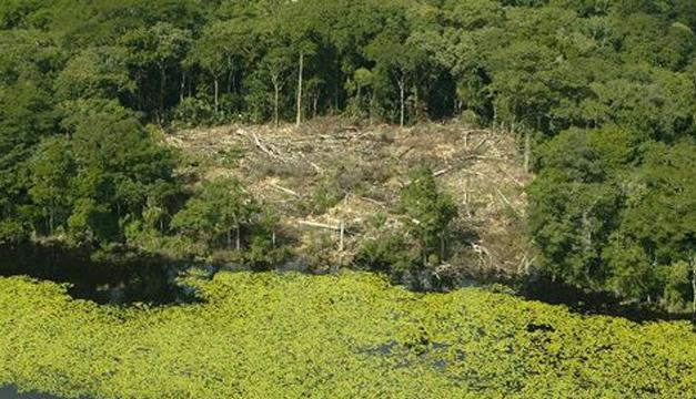 Bosques-Guatemala