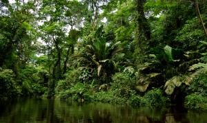 Parque Nacional tortuguero. Tomada de internet.