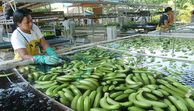 banano-honduras
