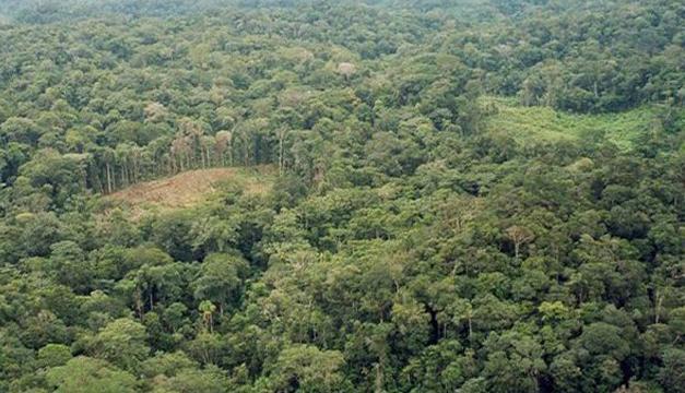 bosque-mesoamerica