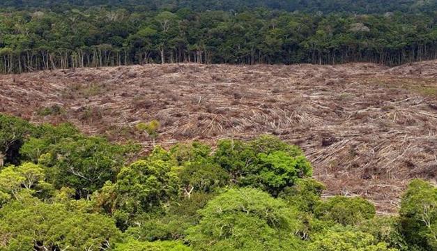 Foto de archivo de árboles talados en la selva amazónica. EFE