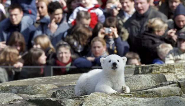 Knut poco después de nacer en 2007 en el Zoo de Berlín. EFE