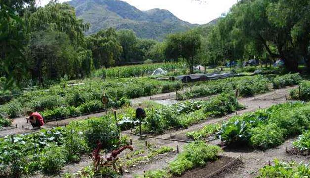 Cultivo de alimentos órganicos. Tomada de internet.