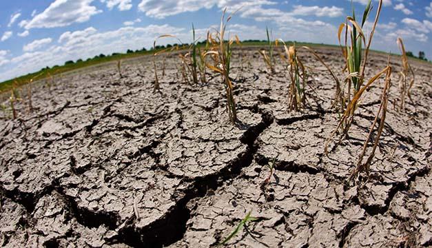 Tierras dañadas a raíz de la sequía. Créditos: Prensa Libre.