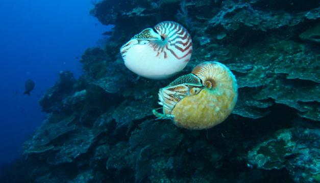 animal-marino