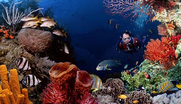 arrecifes-indonesia