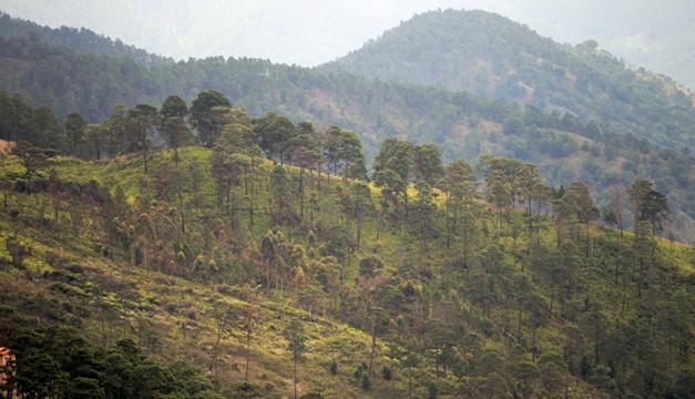 Bosque deforestado/Foto EFE