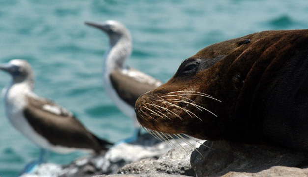 Ecuador-fauna-leon-marino-aves
