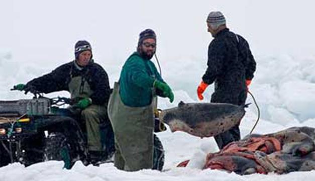 Cazadores de foca. Foto tomada de internet.