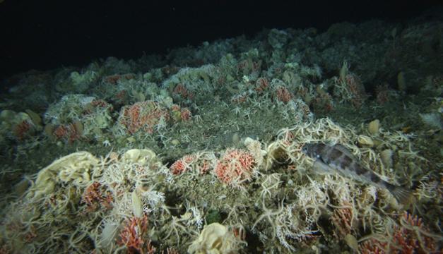 Fondo marino en la Antártida/EFE