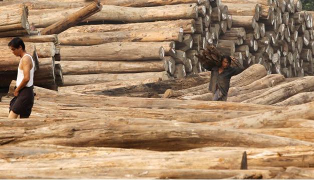 Troncos de madera.EFE