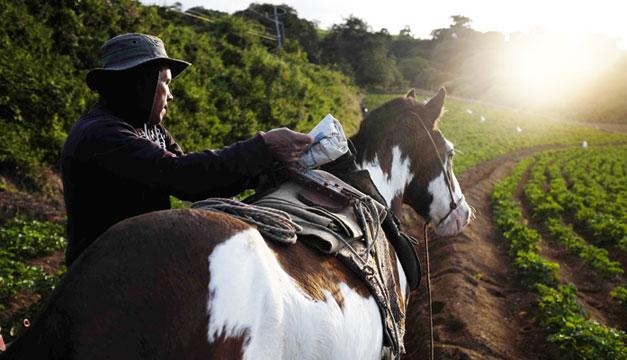 Salario-minimo-cultivo-caballo