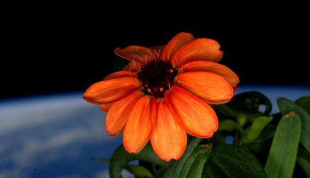 Flor en espacio exterior