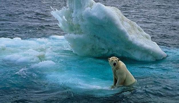 Oso polar-cambio climático EFE