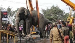 Elefante-salvaje-en-la-India-2