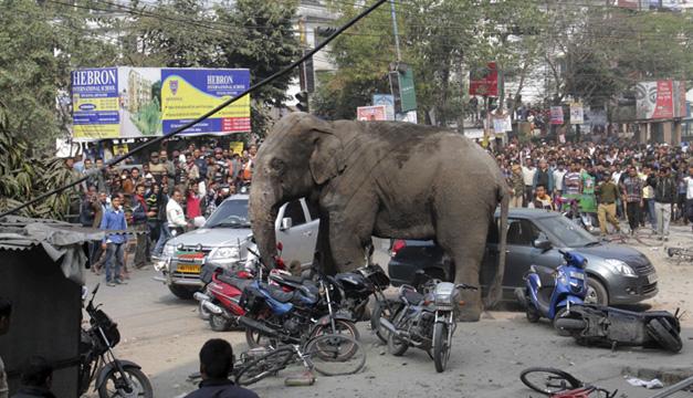 Elefante-salvaje-en-la-India