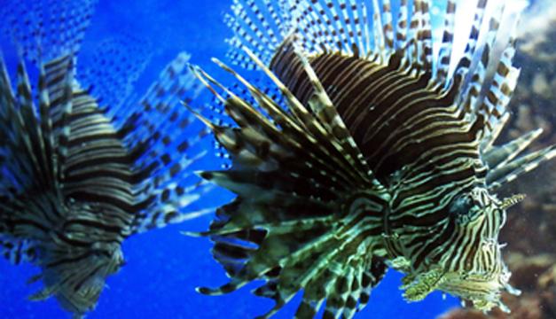 Especíes marinas-EFE