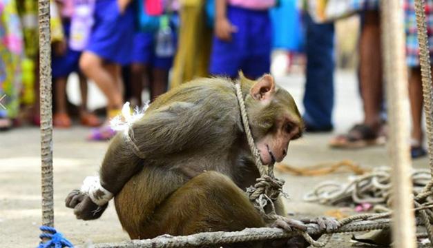 Mono capturado