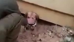 Perrita rescata a sus cachorros