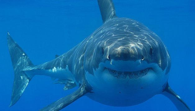 Tiburones-EFE