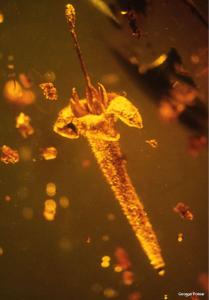 flor-fosil