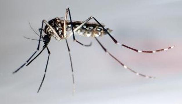 zancudo-zika-04022016