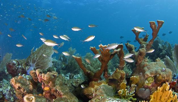 Gran Barrera corales-EFE