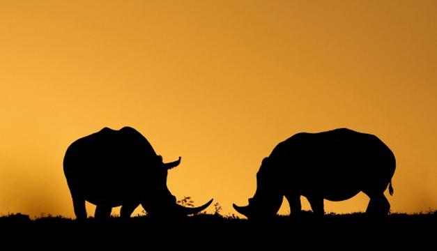 Rinocerontes-EFE