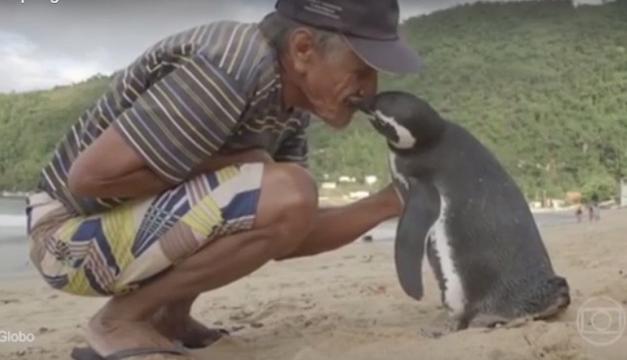 hombre-pinguino