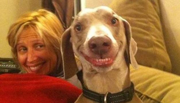 perros feliz