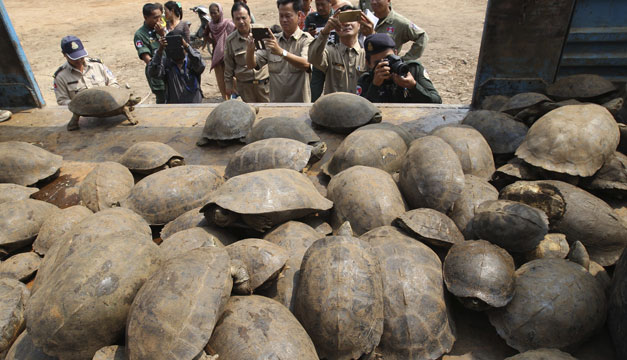 tortugas-camboya