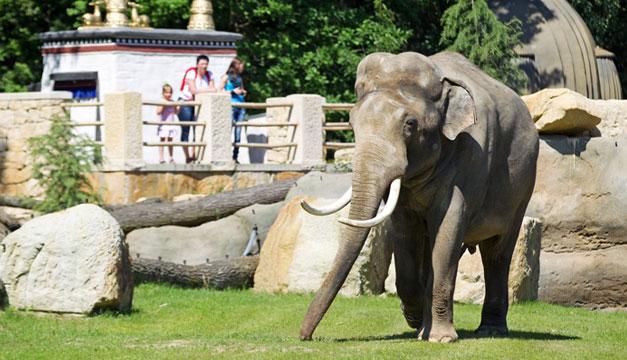 Elefanta-Janita-Praga