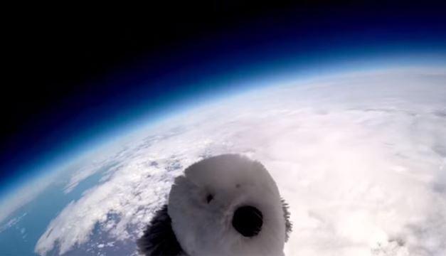 Sam-Perrito espacial