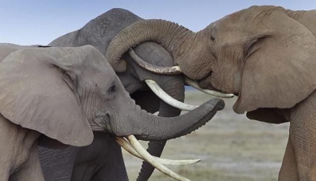 elefantes-efe