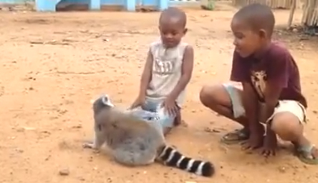 lemur-video