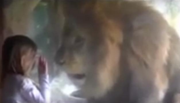 menor y leon
