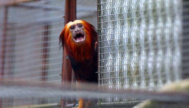 primate-Xinhua