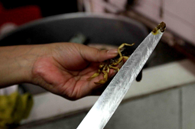 (160523) -- DURANGO, mayo 23, 2016 (Xinhua) -- Una persona corta un alacrán para servirlo en un taco, en Durango, México, el 23 de mayo de 2016. De acuerdo con información de la prensa local, el taco de alacrán, preparado a base de este animal que abunda en la región y que es de los más venenosos, se ha vuelto desde hace unos seis meses uno de los preferidos de los visitantes, aunque no tanto con los lugareños, gracias a su textura crujiente y a su sabor parecido al de las papas fritas. (Xinhua/Str) (da) (vf)