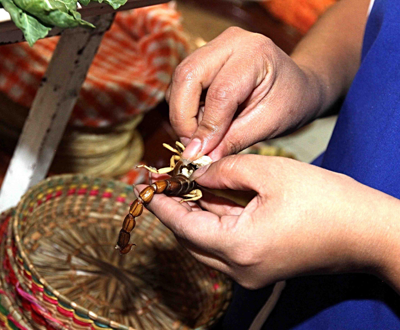 (160523) -- DURANGO, mayo 23, 2016 (Xinhua) -- Una persona prepara un alacrán para servirlo en un taco, en Durango, México, el 23 de mayo de 2016. De acuerdo con información de la prensa local, el taco de alacrán, preparado a base de este animal que abunda en la región y que es de los más venenosos, se ha vuelto desde hace unos seis meses uno de los preferidos de los visitantes, aunque no tanto con los lugareños, gracias a su textura crujiente y a su sabor parecido al de las papas fritas. (Xinhua/Str) (da) (vf)