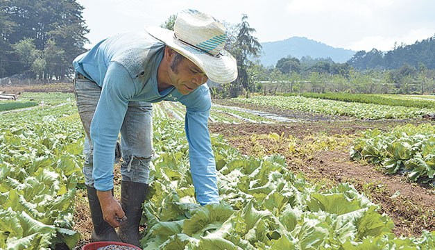 Campesino-agricultura-siembra
