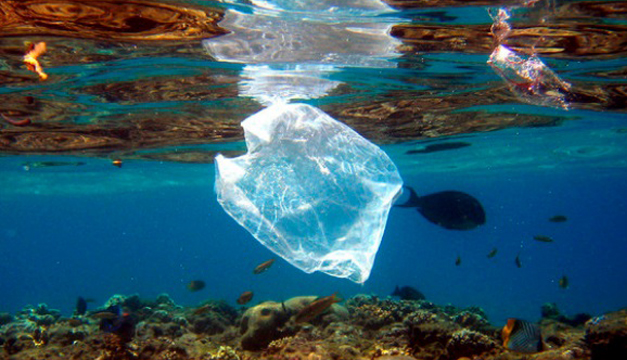¿Cuáles son los animales marinos que mueren en EEUU a causa del plástico?